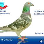 loc-2-derby
