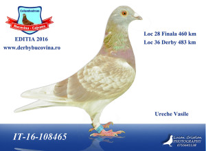 loc-28-finala